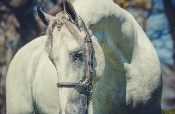 'Cavalgar em liberdade é o anseio de toda alma!'. Foto: Divulgação